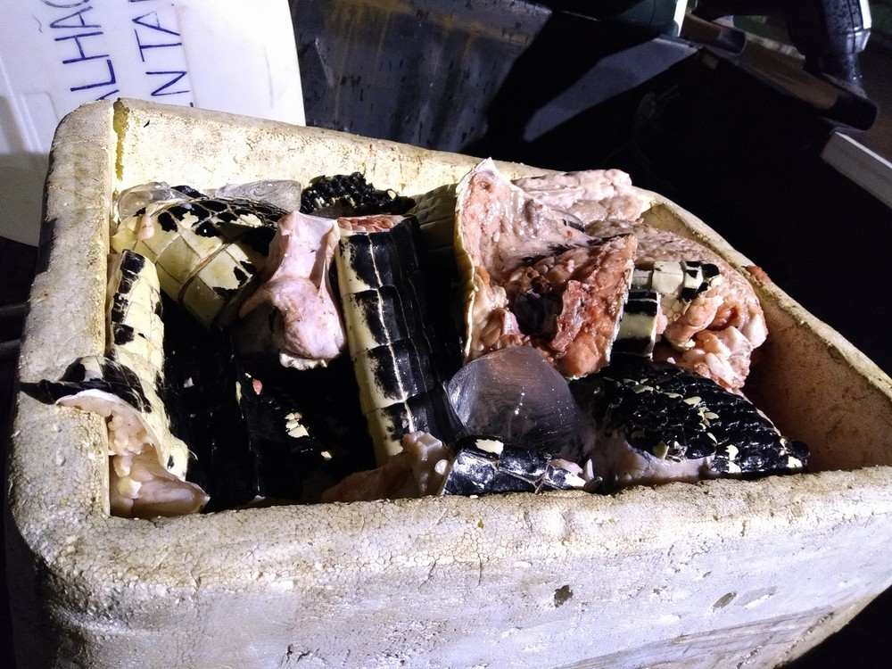 Cerca de 70 quilos de carne de jacaré foram apreendidos em Santana, no Amapá (Foto: Divulgação/Polícia Militar)