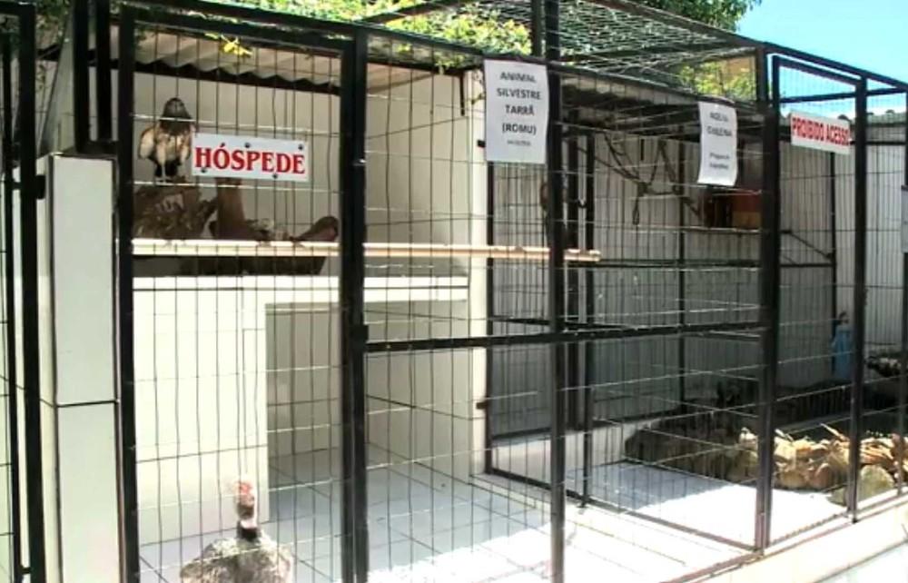 Animais abrigados por conta da influência humana (Foto: Reprodução/RBS TV)