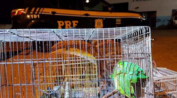 prf-resgata-aves-silvestres-criadas-em-cativeiro-na-cidade-de-cipo-ba_5c6be67bdaff2-696x387