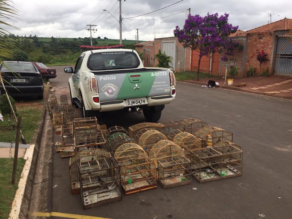 Pássaros apreendidos pela Polícia Militar Ambiental em Rio Claro — Foto: Polícia Ambiental/Divulgação