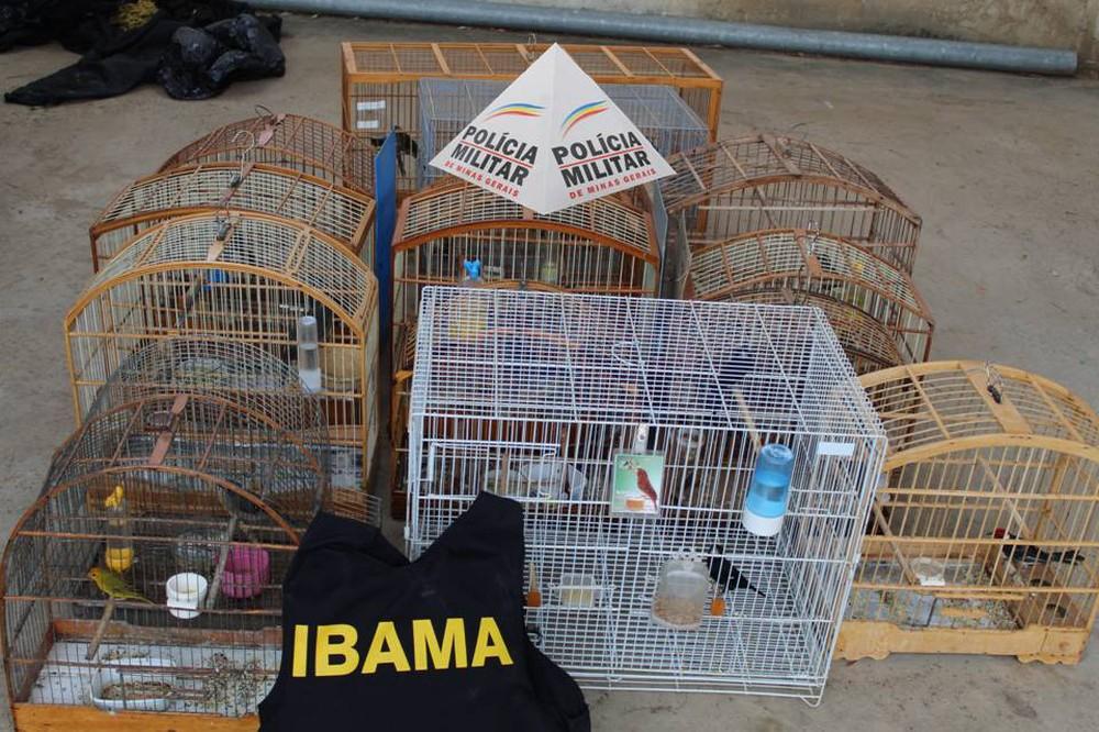 Aves silvestres foram apreendidas durante operação em Janaúba — Foto: Divulgação