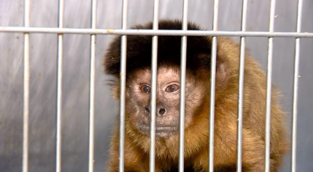 Onde está a fauna brasileira? Panorama do tráfico de animais revela futuro preocupante