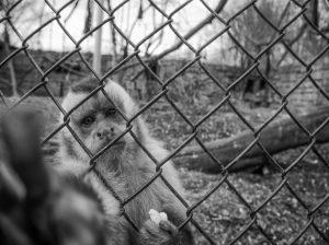 Brasil: país líder em biodiversidade também é um dos que mais sofre com o tráfico de animais silvestres