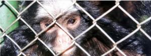 ONG de combate ao crime rastreia o comércio de vida selvagem no Brasil no WhatsApp e no Facebook
